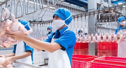 Berita XL: FlexIoT untuk Digitalisasi Peternakan Ayam